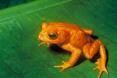 Evolución de las ranas » RANAPEDIA